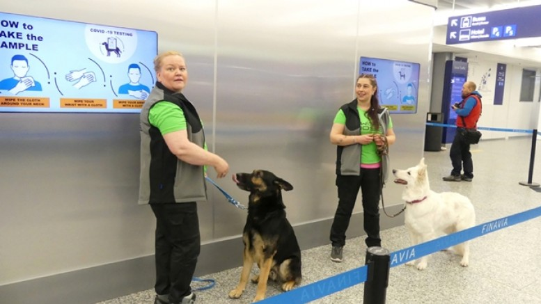 Almanya'da köpekler korona testi yapacak